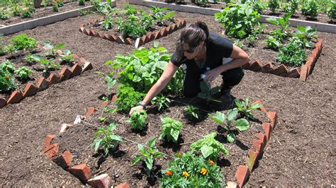 best public gardens master gardener starts community garden edible east end