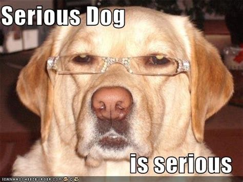 Serious Dog Meme - jeremy clarkson s z06 review is in page 12