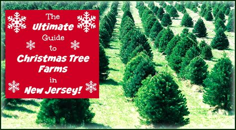 best christmas tree farm in nj 28 best nj tree farm new jersey trees the reason for the season farm