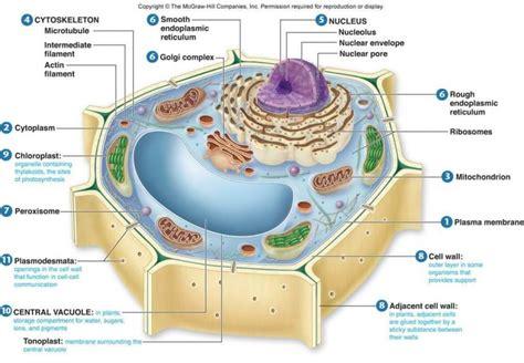 contoh bio riset sel tumbuhan dan fungsinya lengkap penjelasan gambar