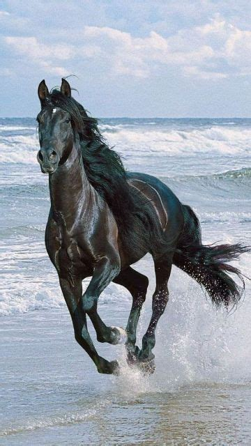 Knights Strung Out Also Search For 25 Best Ideas About Black Horses On Pretty Horses Horses And Black Stallion