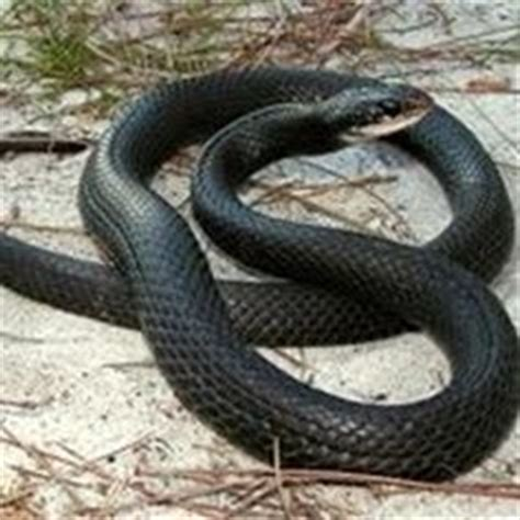 florida s fabulous spiders ebook 1000 images about florida s fabulous snakes on pinterest