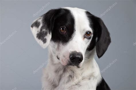 white breeds the mixed breed black and white picture breeds picture