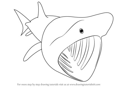 basking shark coloring page learn how to draw a basking shark fishes step by step