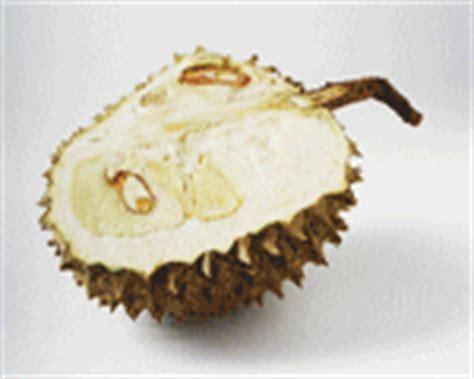 Wanita Menyusui Boleh Makan Durian Wanita Hamil Tidak Boleh Makan Durian Blognya Ummu Kautsar