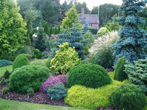 25 best ideas about evergreen 25 best ideas about evergreen garden on