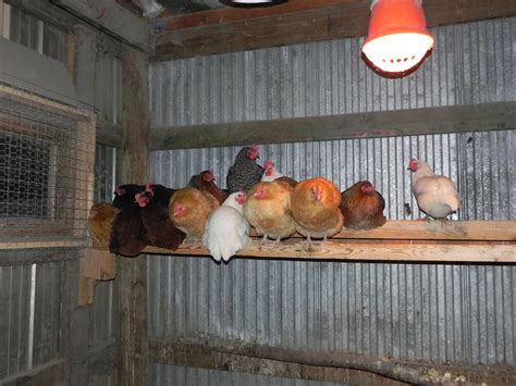 heat l for chickens in winter how to heat a chicken coop in the winter 53 with how to