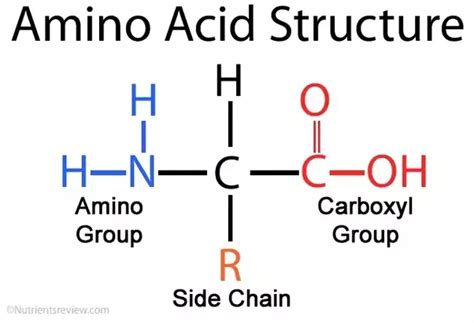 h protein define what is imino acid and how is it different from amino acid