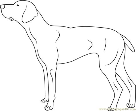 doberman coloring page free dog coloring pages