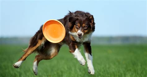 games to play with your dog in the house fun dog games to play with your pooch dogalize