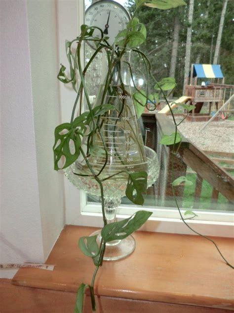 homebase decorative balls growing plants in water apartment gardening pinterest