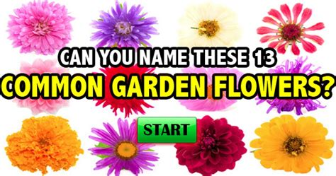 awesome 25 common garden flowers design ideas of common