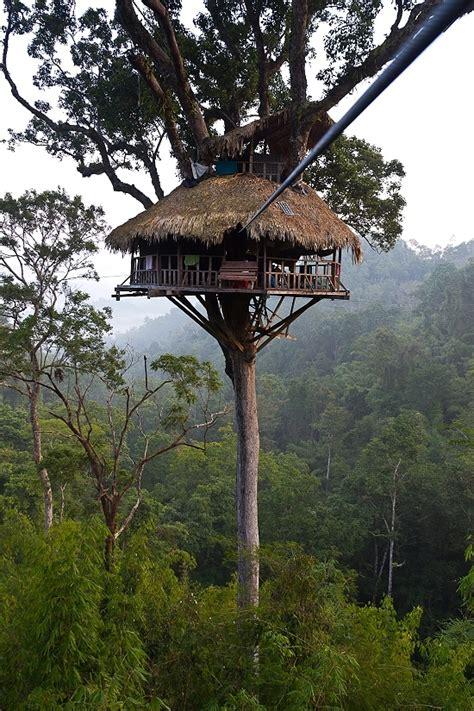 baum haus 1000 ideas about amazing tree house on tree