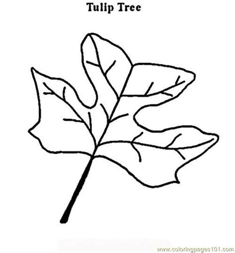 tulip leaf coloring page how to draw tulip tree