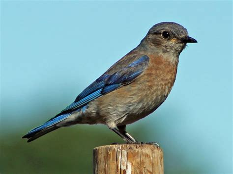 western north carolina birds identification quotes