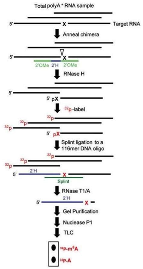 scarlet workflow epigenetics archives zone in with zonzone in with zon