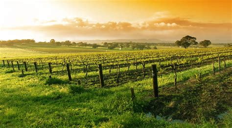 best time to visit napa valley wine country