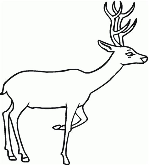 coloring page deer free printable deer coloring pages for