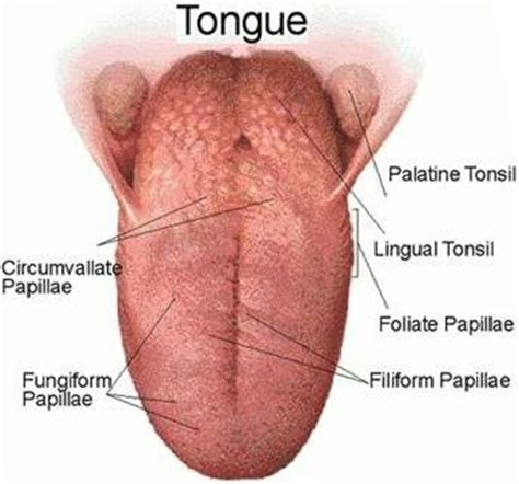 can a psychiatric prognosis hurt you in a base of tongue cancer