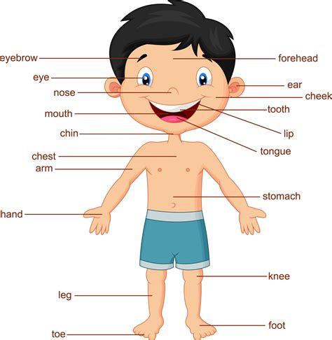 imagenes en ingles de las partes del cuerpo partes del cuerpo ingles ni 241 o imagenes educativas