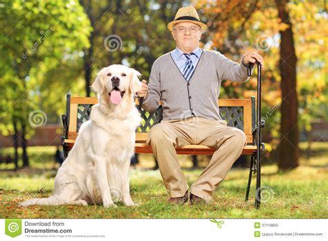 bench labrador retriever senior man sitting on a bench with his dog in a park stock