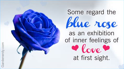 what does a blue rose tattoo symbolize symbolic meaning of blue roses that ll leave you stupefied
