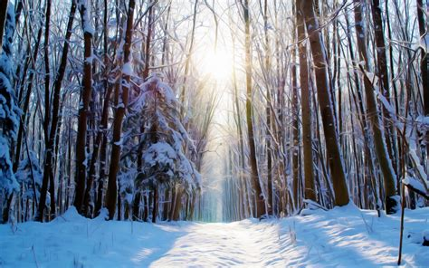 wallpaper winter forest paint snow  creative