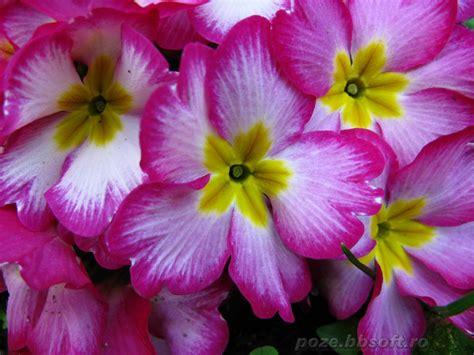 all best picos poze desktop flori buchete de flori top de 8 martie de colorat wallpapers