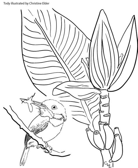 tody bird coloring page jamaican bird coloring page coloring pages