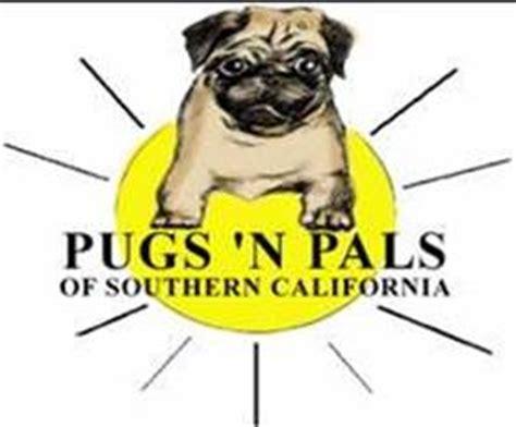 pug rescue scotland hale pet door pug rescue organizations