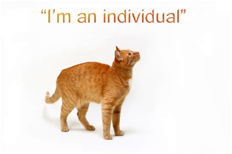Ginger Cat Personality