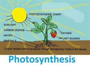 Biology Description by Photosynthesis Ideas Kid Definitions And Photosynthesis