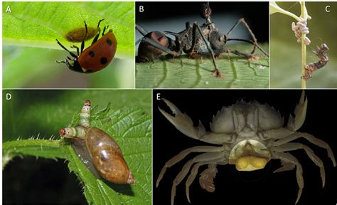 133247599x le parasitisme et la symbiose symbiose et parasitisme encyclop 233 die de l environnement