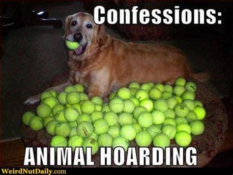 Funny Tennis Memes - funny tennis meme askideas com