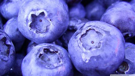 blueberry wallpaper download blueberry wallpaper 1920x1080 wallpoper 437245