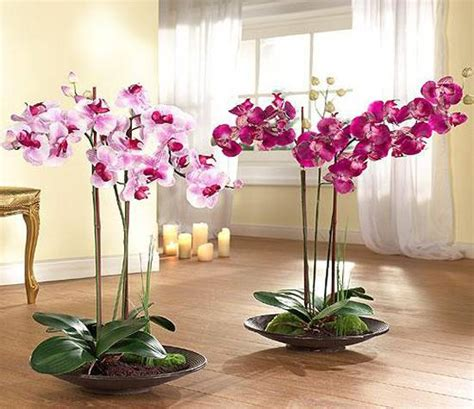 sophisticated orchids for interior decorating and