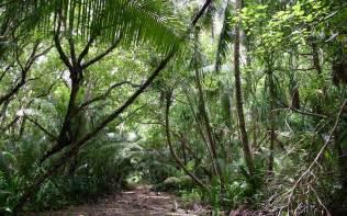jungle 2560 x 1600 nature photography miriadna com