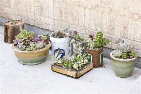 succulent pots repotting succulents succulents and sunshine