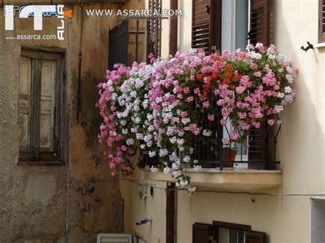 finestre fiorite non gerani non gerani balconi e finestre