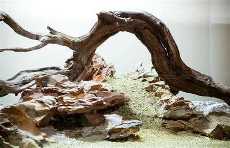 dragon stone aquascape stu s 90x45x45 dragon stone scape aquascaping world forum