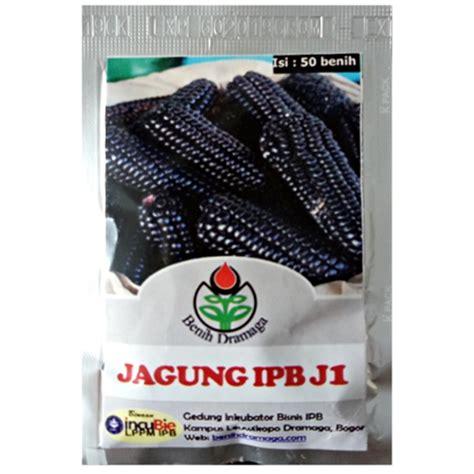 Benih Jagung Unggul benih jagung hitam ipb j1 50 biji dramaga bibitbunga