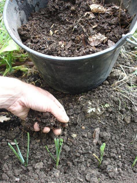 apprendre a planter des poireaux planter des poireaux pas pas planter des poireaux quand
