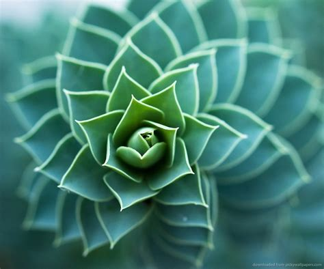 spiral pattern nature 37 best images about fibonacci in nature on pinterest