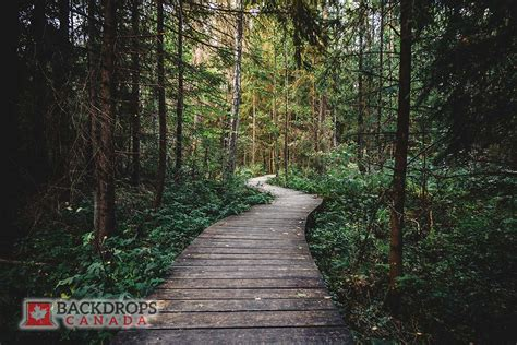pathway pictures forest pathway backdrops canada