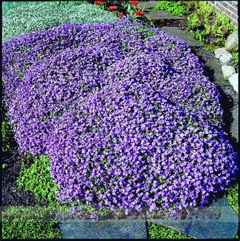 online get cheap purple ground cover aliexpress com