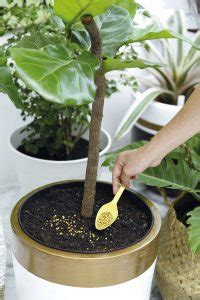 Pupuk Untuk Bunga Pukul 9 cara merawat bunga hidup agar tidak layu dan tetap tumbuh