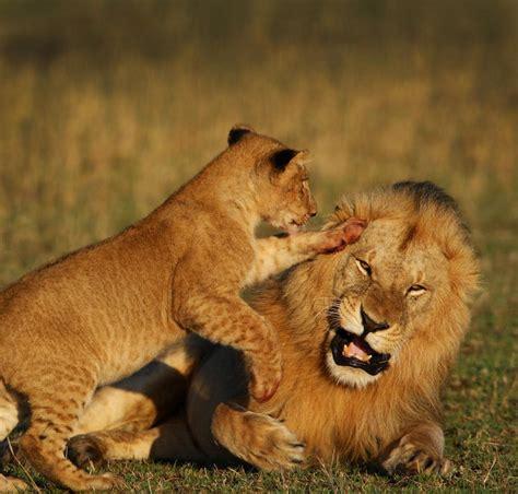 best safari tour operators botswana 5 safari 2018 2019 zicasso