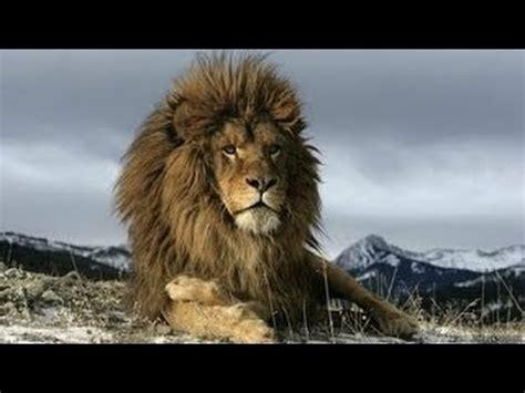 imagenes de leones national geographic national geographic 2017 leones asesinos crueles