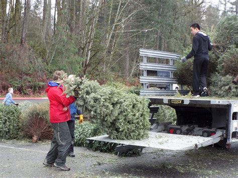 christmas tree recycling issaquah boy scouts return for 34th annual tree recycling drive issaquah reporter
