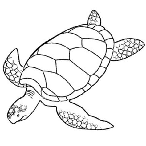 realistic sea turtle coloring page realistic sea turtle